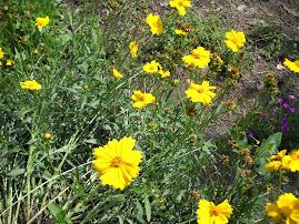 Forever Memory Garden Easter 2011