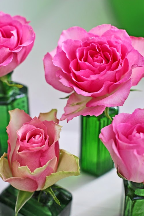 Pink Roses in Green Glass Bottles