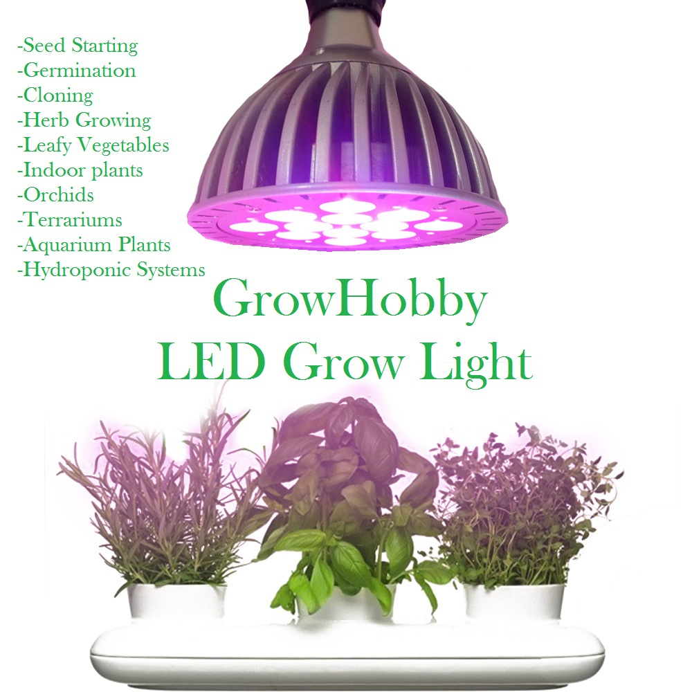 how to grow bulbs from seeds