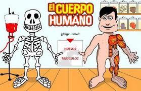 https://www.cajastur.es/clubdoblea/diviertete/juegos/elcuerpohumano.html