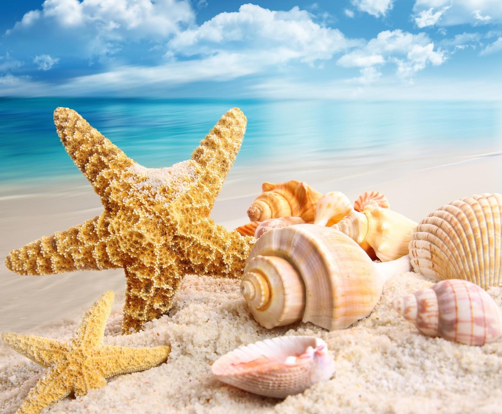 Download Beautiful Sea Wallpapers