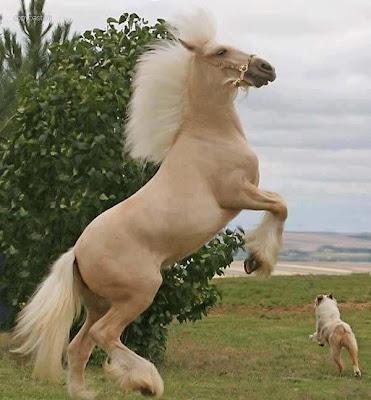 عندما يعجز لسانك عن الوصف قل سبحان الخالق المصور.. من أجمل الخيول في العالم