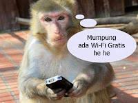 Waspada ! Pengaruh Buruk Sinyal WiFi Terhadap Kesehatan Manusia