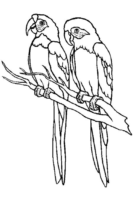 اثنين من طائر الببغاء على اغصان الأشجار في صورة لتلوين الاطفال