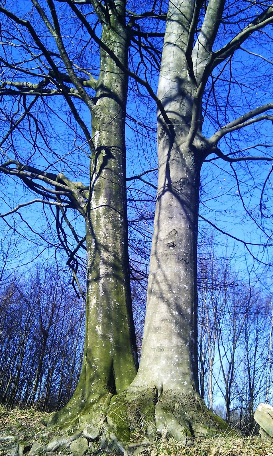 Från flummiga tankar till seriösa känslor Träd och Symbolik