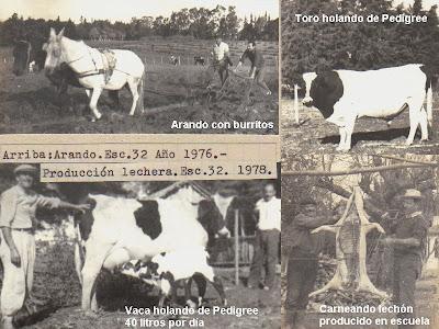 Producción escuela granja