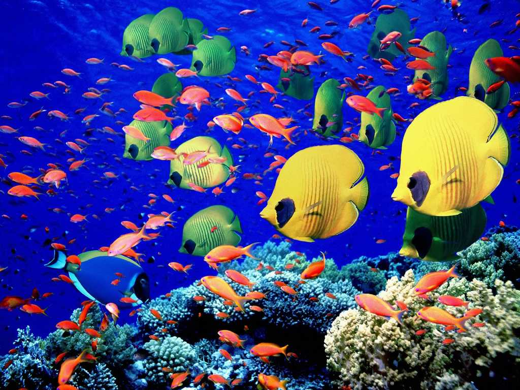 Colourful Fish Wallpaper Colourful Fish Scales