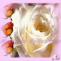 Da Era Terciária, há 25 milhões de anos atrás,são os primeiros vestígios da rosa, a planta ornamental mais cultivada no mundo