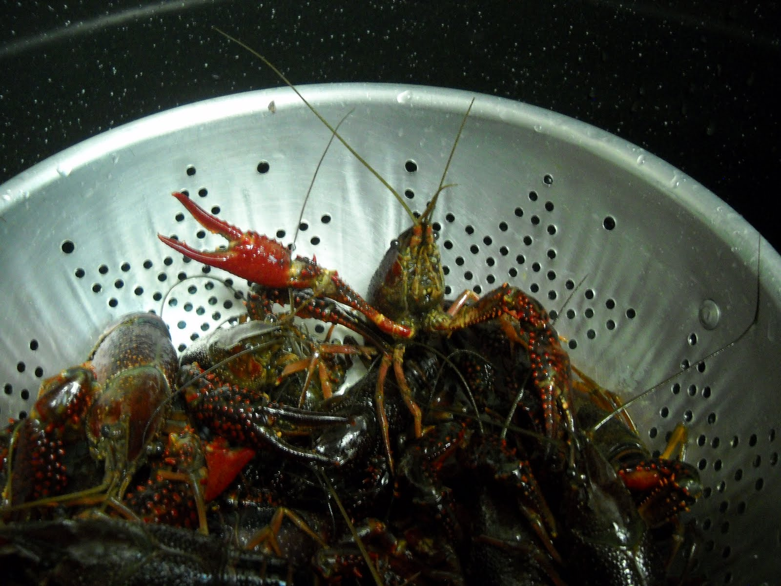 While You Do This, Boil Enough Water To Cover The Crawfish Measure This Out  By