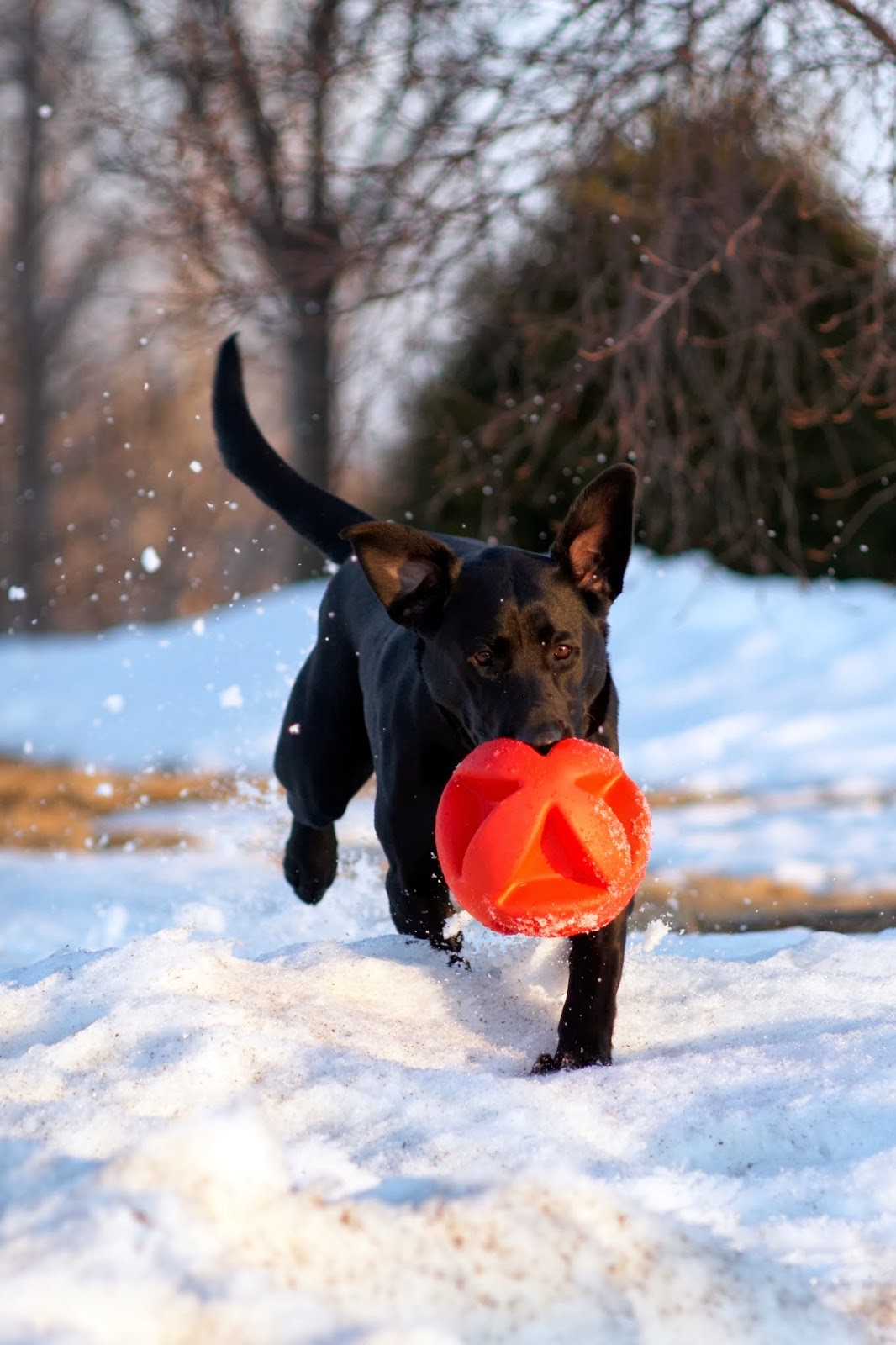 Exercising with Your Dog in Winter images