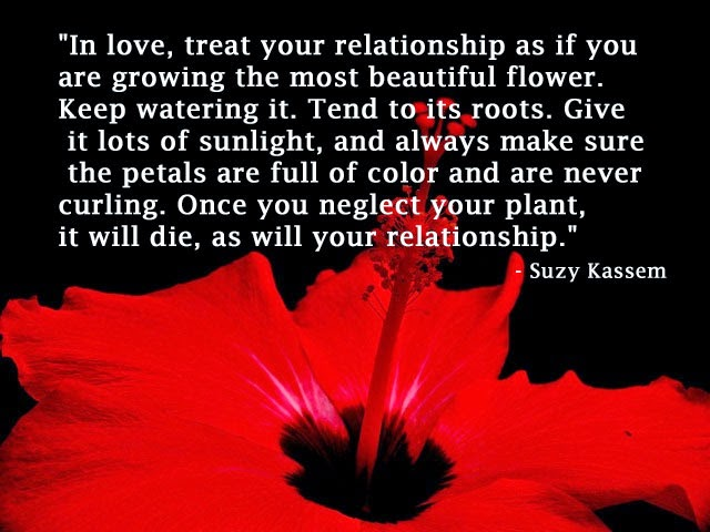 in love treat your relationship as if you are growing the most beautiful flower. suzy Kassem