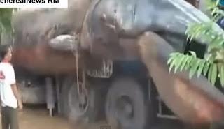 Enorme Animal Marino Causa Terror en Vietnam