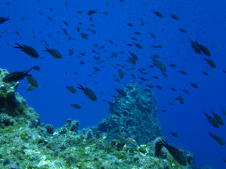 A school of fish in Santorini's Caldera.