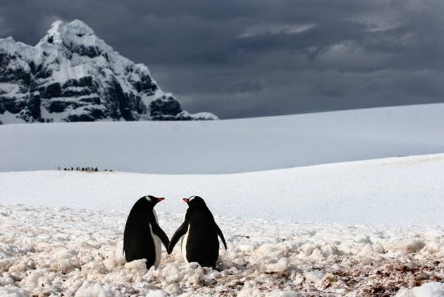 Funny animals of the week - 5 April 2014 (40 pics), two penguin holding hands