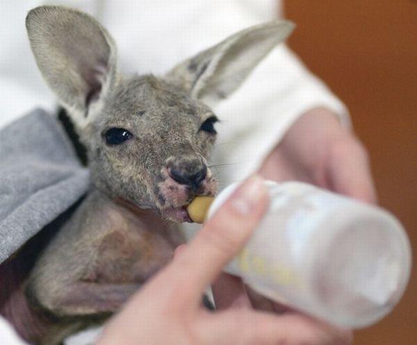 funny baby animals -#main