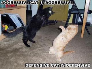 Pics of funny cats 4