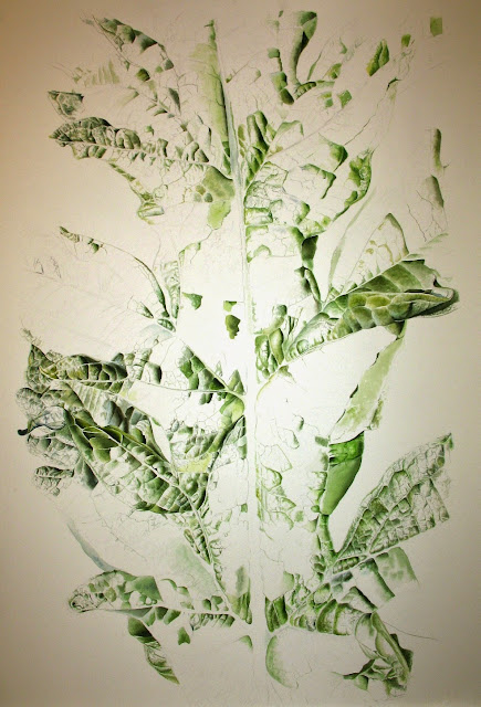 Artichoke Cardoon Leaf