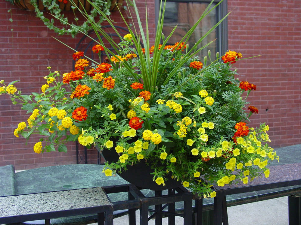 Container Garden Tips The Fancy Flora