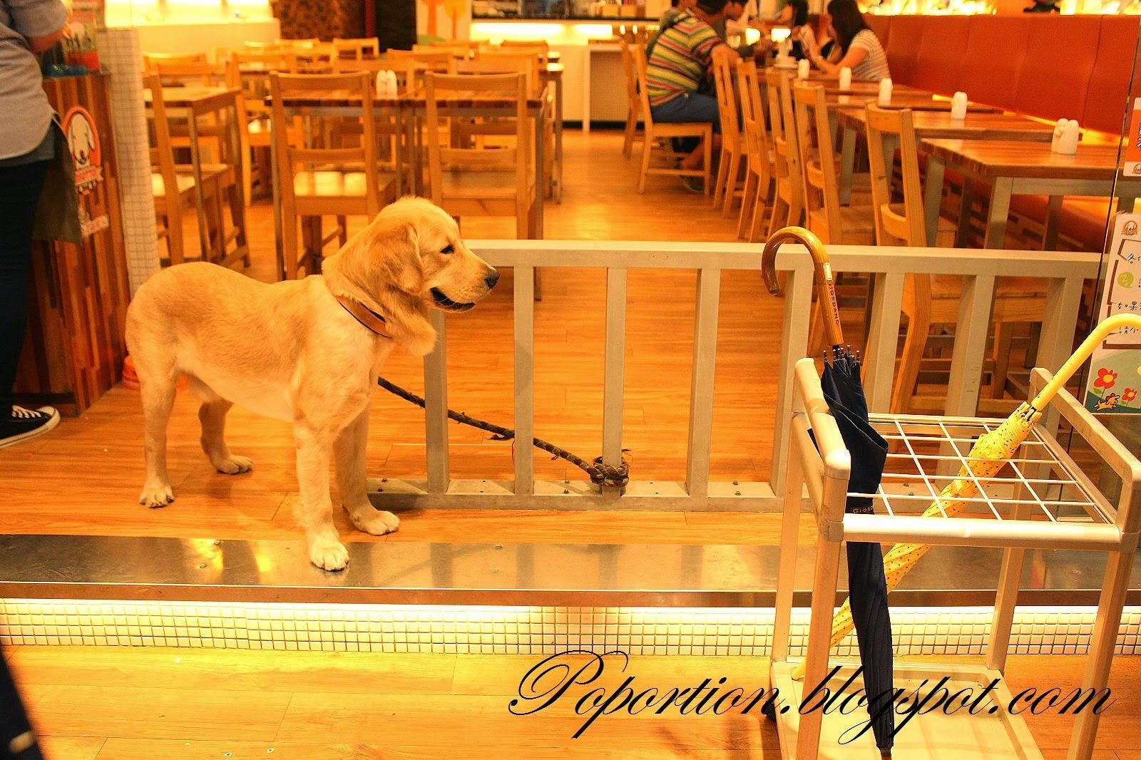 taiwan ximending dog
