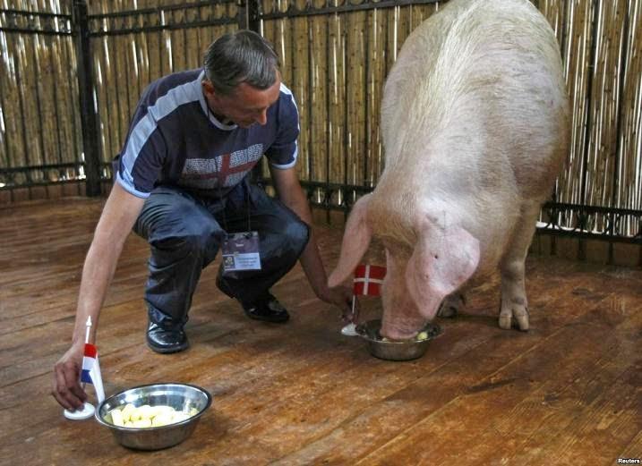 lợn tiên tri khryak
