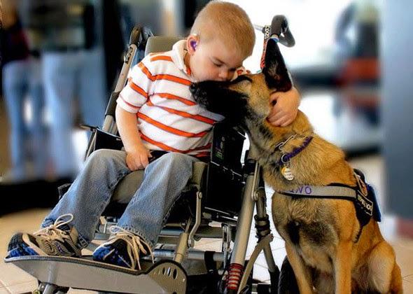 Perros de ayuda a personas con movilidad reducida