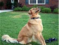 Advice On Having A Well-Trained And Well-Behaved Dog