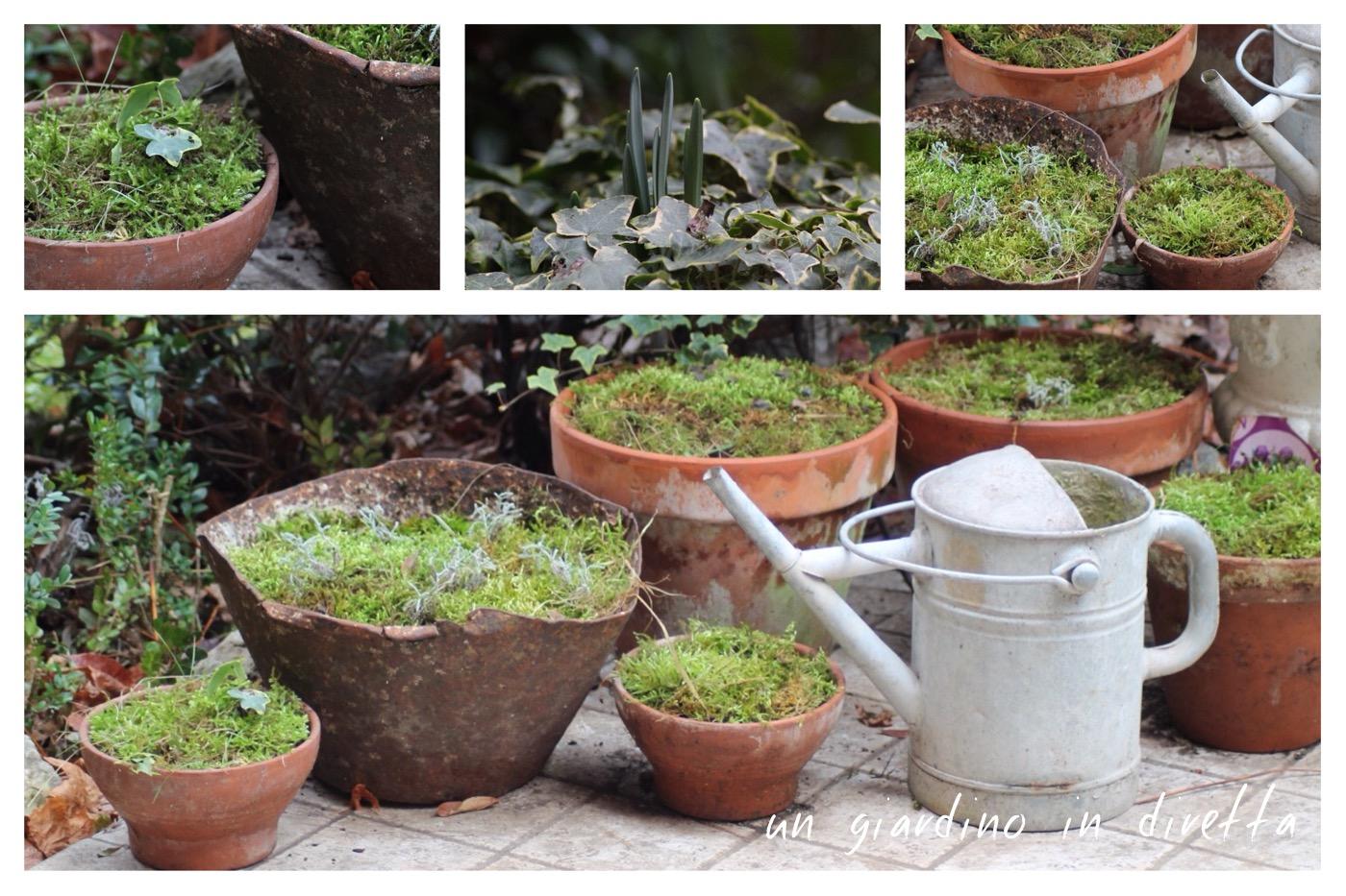 Febbraio lavori in giardino un giardino in diretta - Lavori in giardino ...