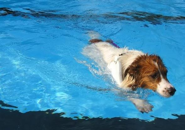 5 Benefits of Taking Your Dog Swimming | CANIDAE®
