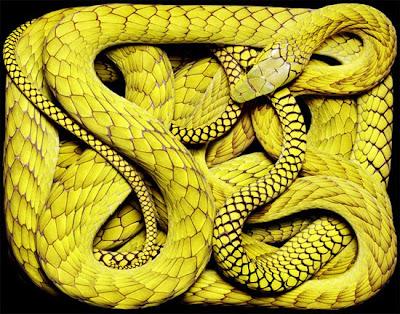 ular-beracun