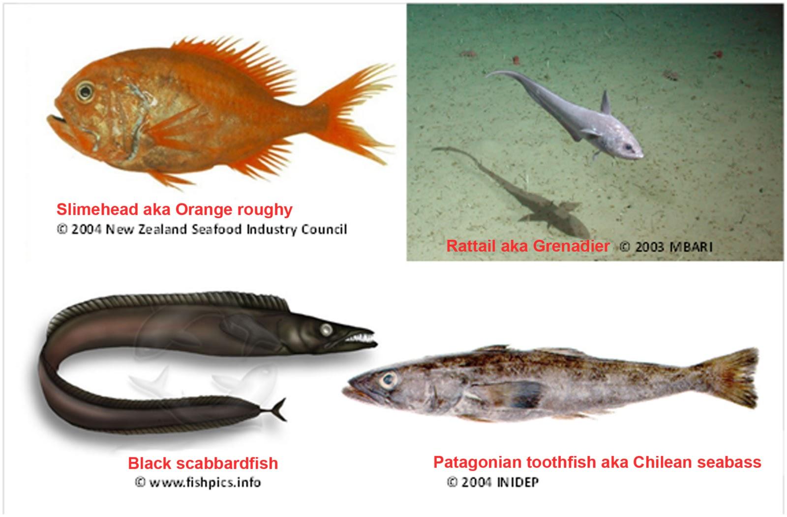 Sea fish names funny fish names 2017 fish tank maintenance for Name of fish