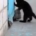 Brave kitten saves a discomfort Dog