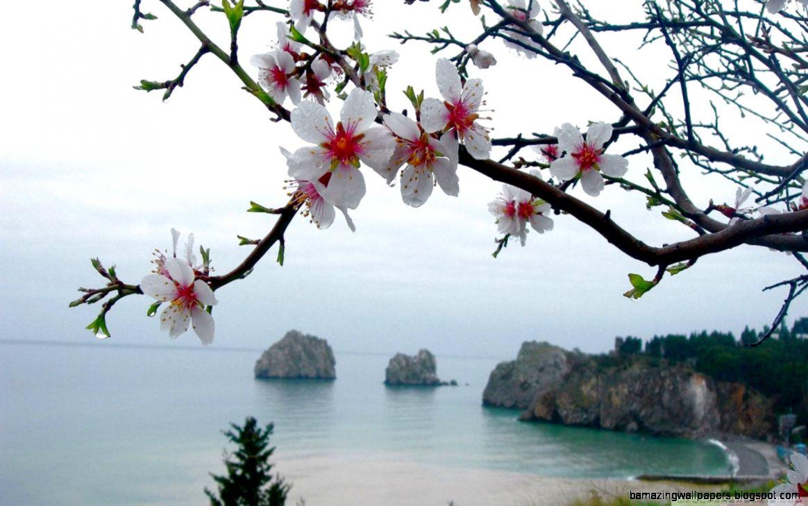 Spring Season HD desktop wallpaper  Widescreen  High Definition