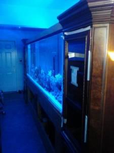 Giant Aquariums 1000 Gallon Aquarium 20000 Nky Cinti