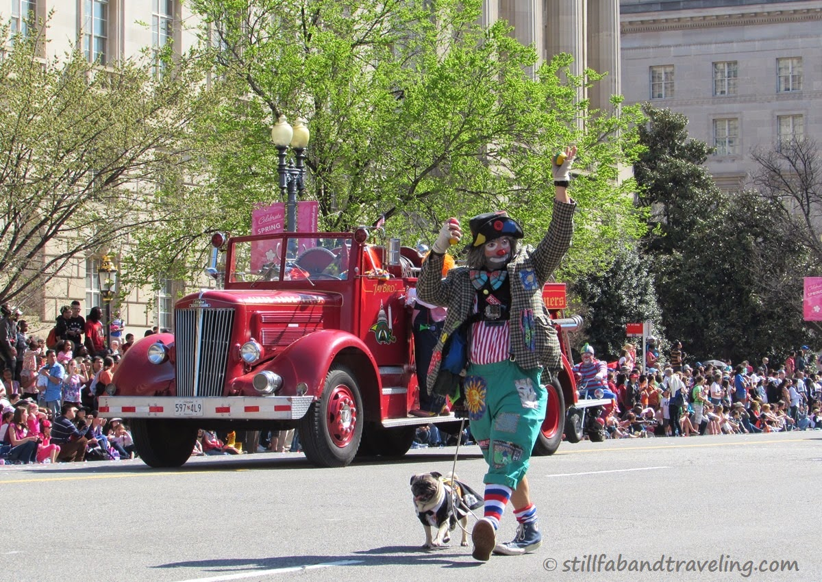 Cherry Blossom parade - clown parading