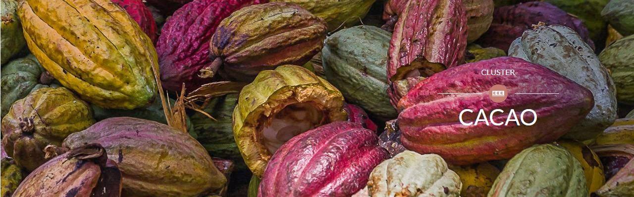 il cluster del cacao a expo 2015 weekendidea