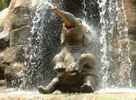 Baby Elephants pictures