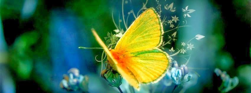 Une belle Couverture facebook papillons exotiques
