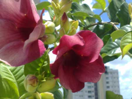 Flores exóticas nomes