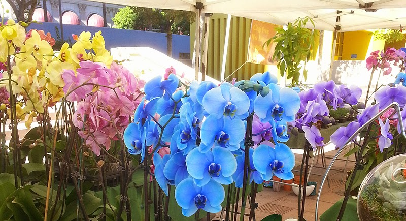 Purple, blue, yellow and pink orchid flowers