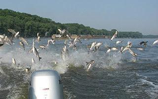 Ιπτάμενα ψάρια! (Βίντεο)