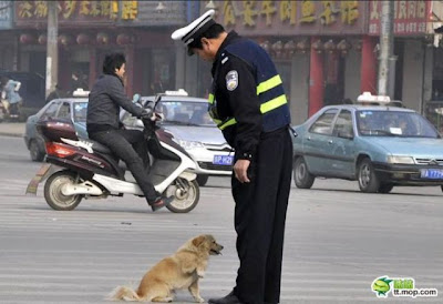 Dog And The Policeman Seen On www.coolpicturegallery.us