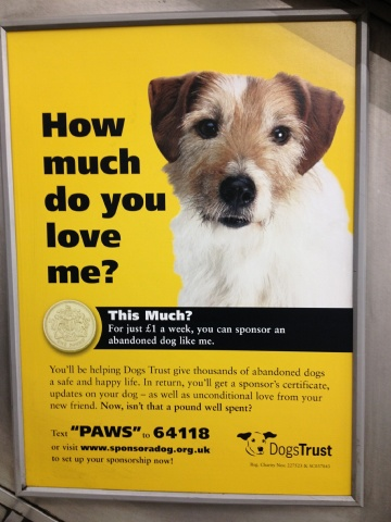 Great Dog Adoption Ads