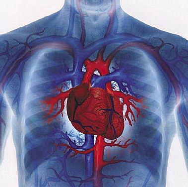 heart diseases remedies