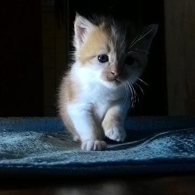 gambar-anak-kucing-lucu _ 04