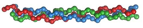 struktur kolagen triple helix - seaweedcollagen.com