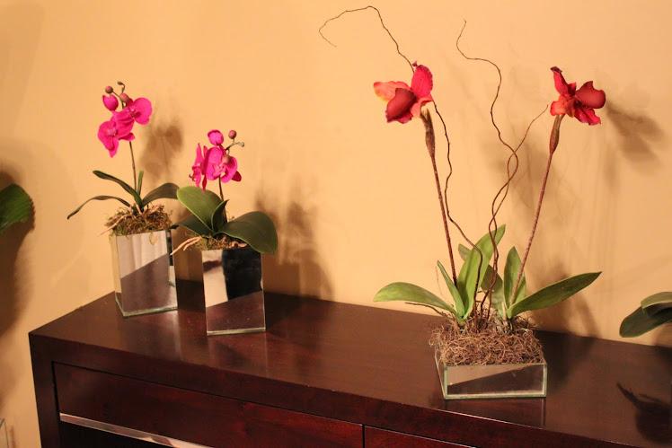 Orquídeas sempre!!!