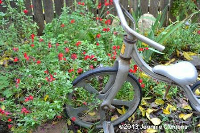 small garden, sage, bike, fall