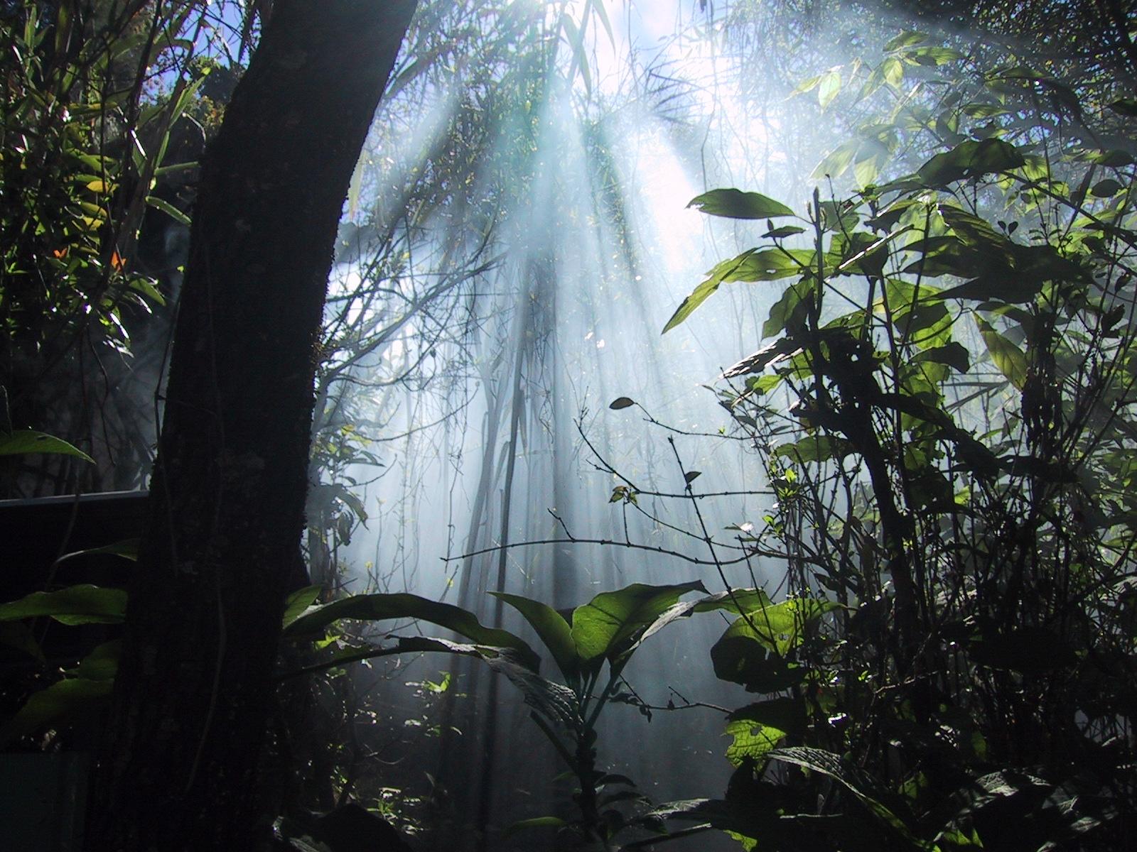 http://3.bp.blogspot.com/-QqHpazLQR28/TsLE6YY-ggI/AAAAAAAACsc/E24b2lw-tQ4/s1600/backgrounds-high-resolution-1280x1024-wallpaper-hd-dense-jungle.jpg