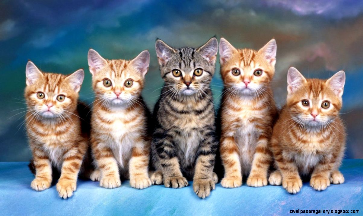 Cat Wallpaper Widescreen  Super Wallpapers