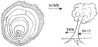 Tekening vervorming van hout door wind